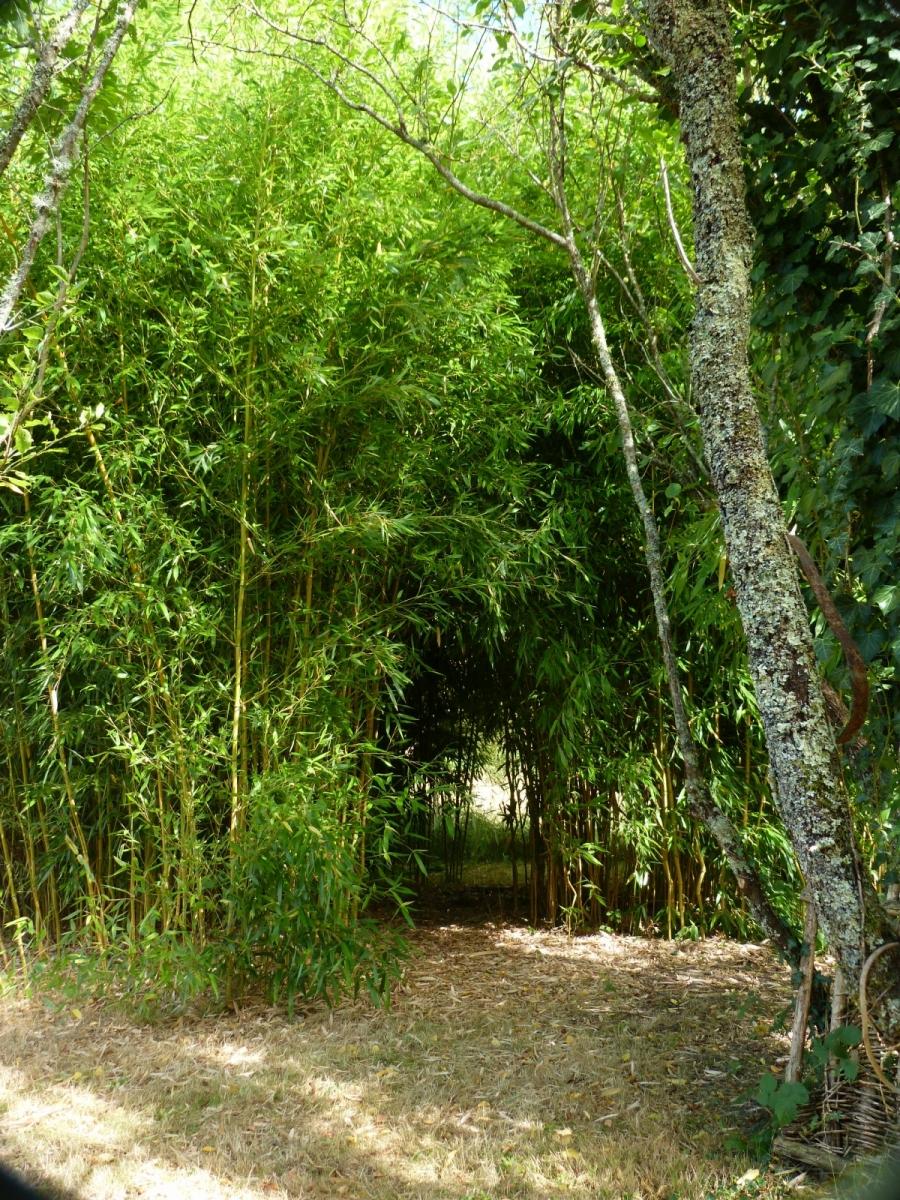 Bambouseraie... chez nous !